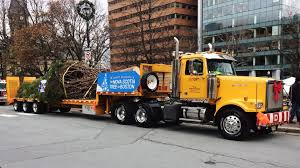 Seeking Trailer Canada Hundreds Gather To Halifax Send Its Annual Tree For