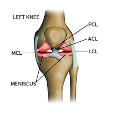 Anatomy Of Knee Injuries Stack Science How Knee Injuries Occur And How To Prevent Them Stack