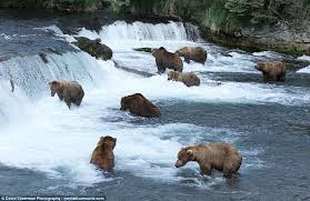 Alaska waterfalls images Grizzly bears enjoy hydrotherapy at brooks falls waterfall in jpg