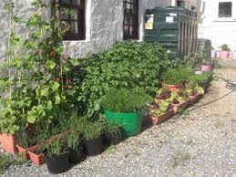 container vegetable gardening ideas