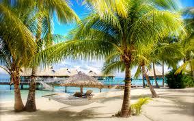 summer palm tree sand sea umbrella beaches wallpapers