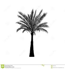 vector sketch date palm tree hand drawn silhouette palm tree