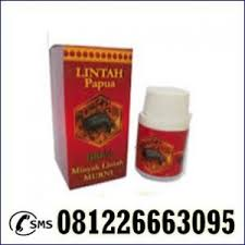 toko resmi jual minyak lintah papua asli di denpasar 081226663095