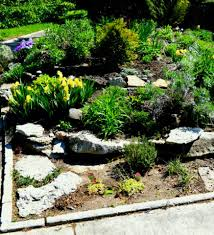 rocks in garden design shining ideas small rock garden designs backyard path decorating