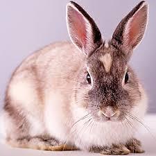 rabbits pet bunny u0026 care petsmart