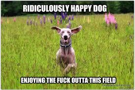 Happy Dog Meme - ridiculously happy dog photo by my sis imgur