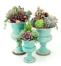 indoor succulent planting ideas and outdoor garden 1 u2013 home