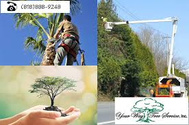 why tree removal calabasas is necessary for you
