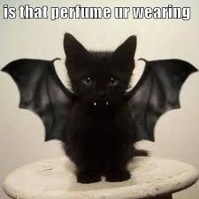 Halloween Cat Meme - is that perfume ur wearing cute pictures pinterest perfume