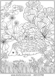 coloring lovely hedgehog garden coloring stock vector