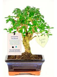 meaning of indoor bonsai trees