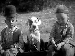 american pit bull terrier history breed history bad rap