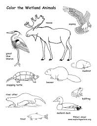 wetland animals coloring