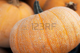 ornamental squash stock photos pictures royalty free ornamental