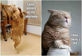 Morning People Meme - enjoy these cat memes on your beautiful day i can has cheezburger