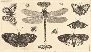 file wenceslas hollar a dragonfly ladybirds and butterflies