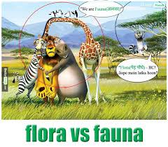 Meme Definition English - flora vs fauna meaning in hindi with picture dictionary