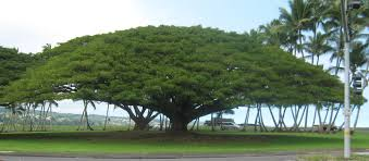 garden hawaii why is a tree called a tree