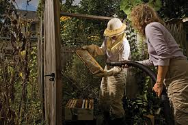 Backyard Gold Beekeeping New Jersey Monthly Best Of Nj