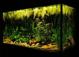 Aquascape Online Nice Low Tech Aquascape Freshwater Aquaria Pinterest Tech
