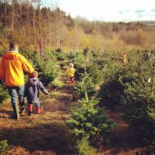 reserve a cut your own christmas tree at wilderness wood