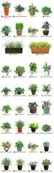 Desk Plant 7 Office Plants You Won U0027t Kill Office Plants Workspaces And