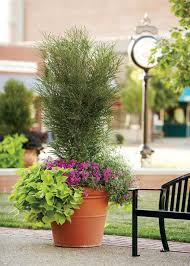 Soil Mix For Container Gardening - secrets to successful container gardening bylands nurseries ltd