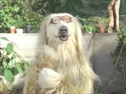 afghan hound creepy calbee potato chips commercial 2010 youtube