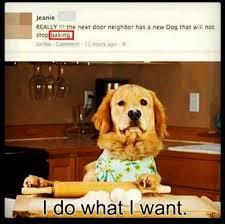 Baking Meme - dog is baking meme by afriendlycow memedroid