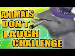 Challenge Zellendust Animals Don T Laugh Challenge Zellendust