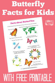 butterfly facts for itsy bitsy