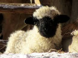 Sheep Toaster 1130 Best Sheep Images On Pinterest Sheep Animals And Farm Animals