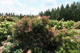 Mn Landscape Arboretum by Missing These Beautiful Summer Days Minnesota Landscape