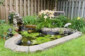 how to maintain and care for backyard ponds and water gardens