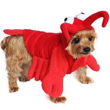 Lobster Halloween Costume Lobster Halloween Dog Costumes