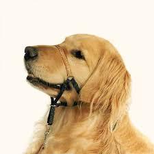 Comfort Golden Comfort Trainer Head Halter Stop Dog Pulling
