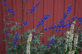 native plants wisconsin flowers of wisconsin daniel mount gardens