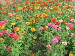 arizona flowers how to the right arizona flora desert flowers new image