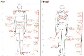 Human Anatomy Male D Human Anatomy Php Science Male And Female Anatomy Pictures At