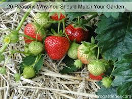 20 reasons why you should mulch your garden the micro gardener