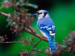 blue bird on tree branch wallpaper 1024 768 birds wallpapers