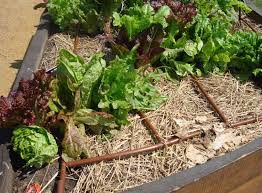 what are the advantages of drip watering garden irrigation systems