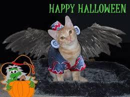 Flying Monkey Costume The Cat U0027s Meow U0027s Halloween Purrade Catster