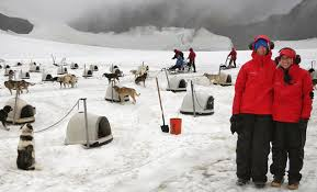 Alaska travel shoes images Glacier dog sledding jpg