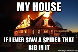 I Saw A Spider Meme - my house if i ever saw a spider that big in it burn it to the