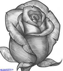 Black Rose Flower Rose Flowers Drawing Black Rose Flower Sketch Bouquet Idea