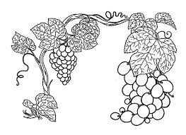 thrives grapes plant coloring pages color luna