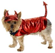 Cheap Dog Costumes Halloween 34 Perros Images Animals Puppies Costumes