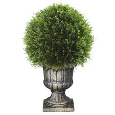 Gardenia Topiary Bonsai Trees Indoor Plants The Home Depot