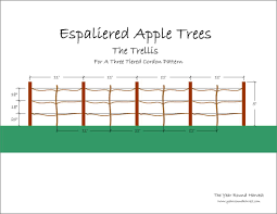 espaliered apple trees u2013 part ii u2013 the trellis the year round